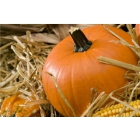 Superfast broadband welcomed to Forth with Halloween-themed cabinet